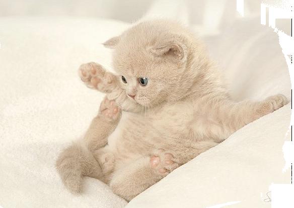 kittens_63